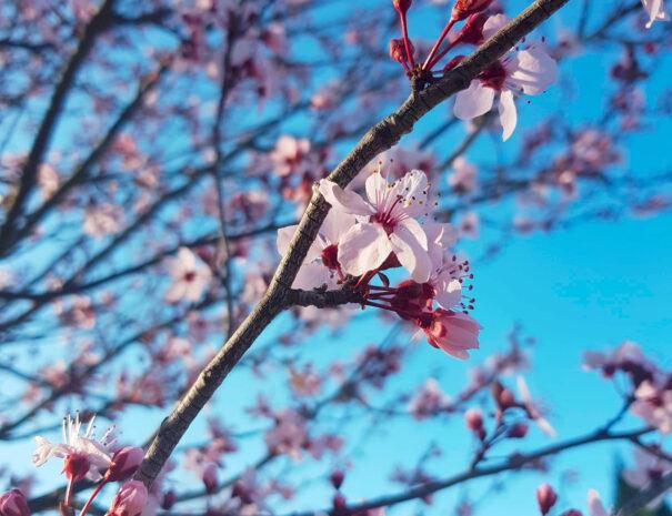 masdepradines-fleurs