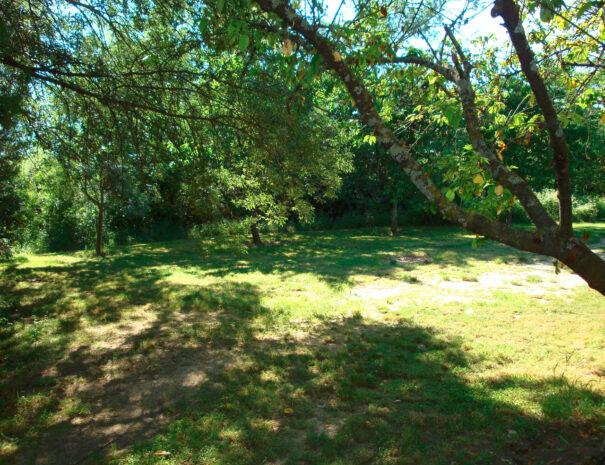 lauriers-jardin2